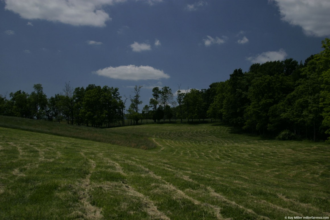 backhayfield