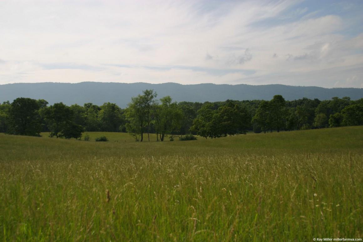 farmfield3